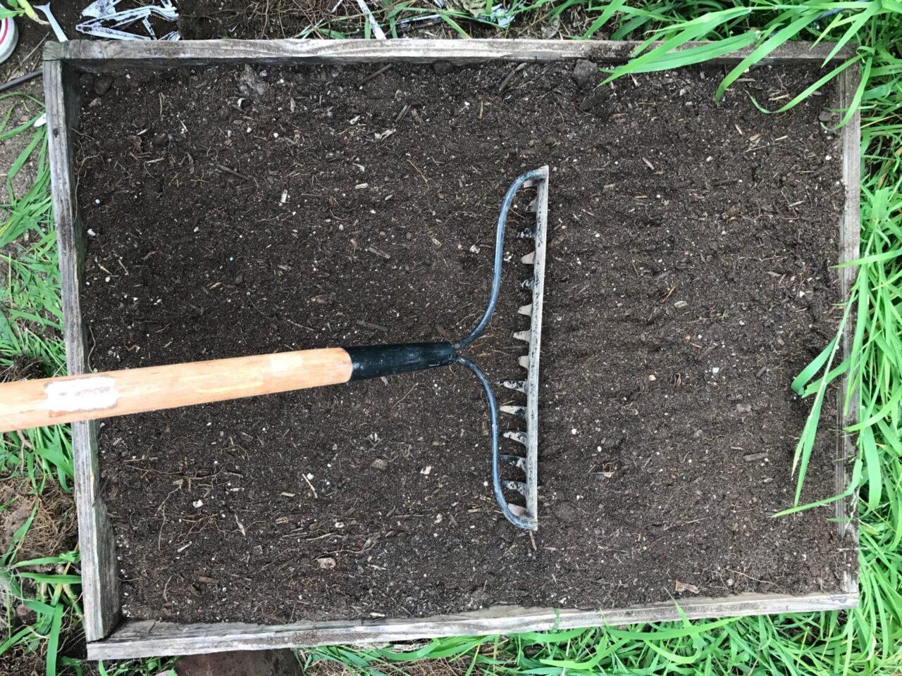 rake the soil even