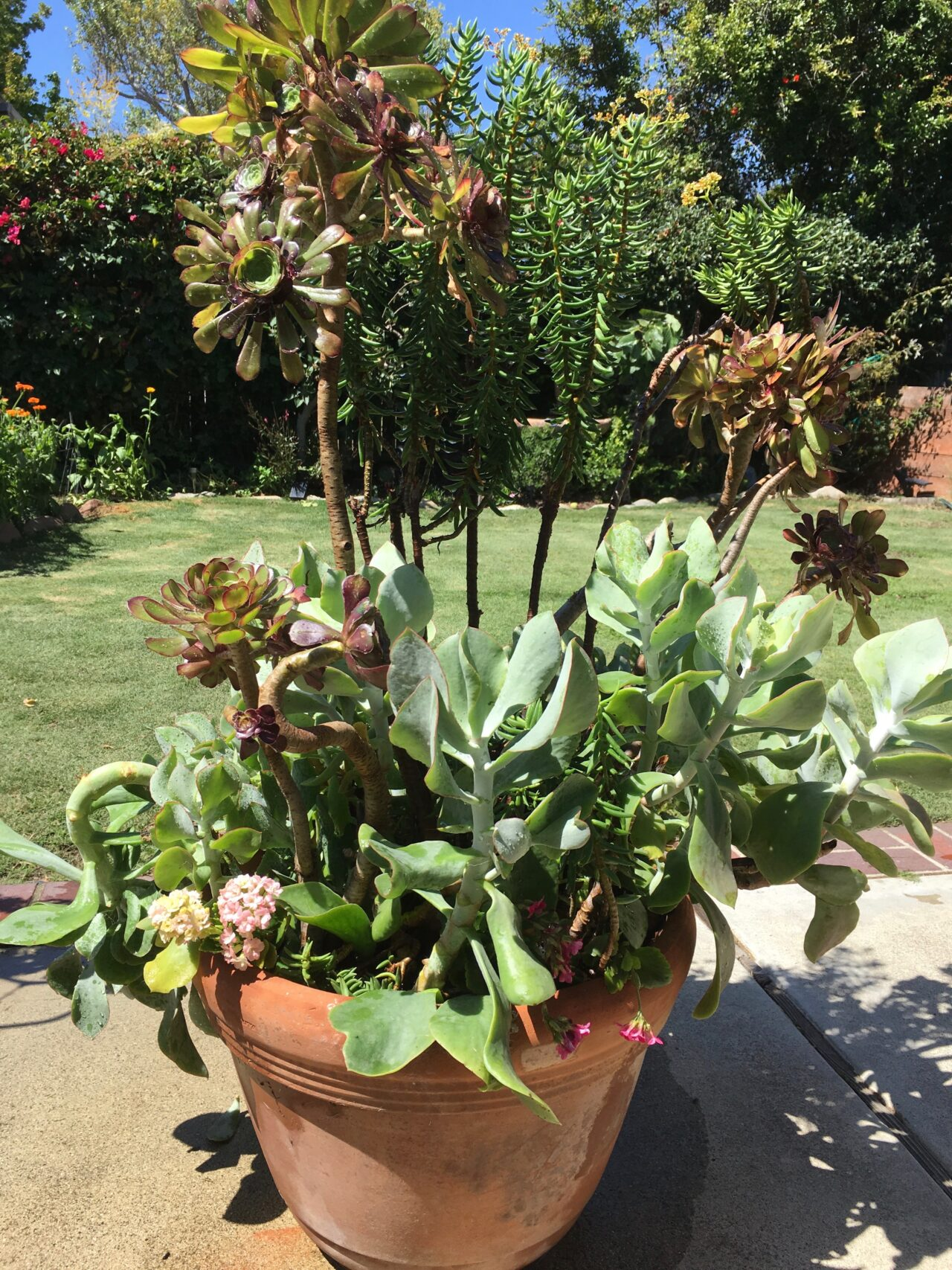 Succulents Grown in a pot