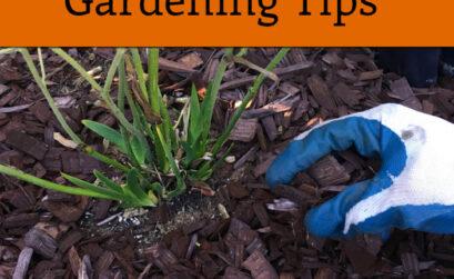 10 Best Fall Gardening Tips2