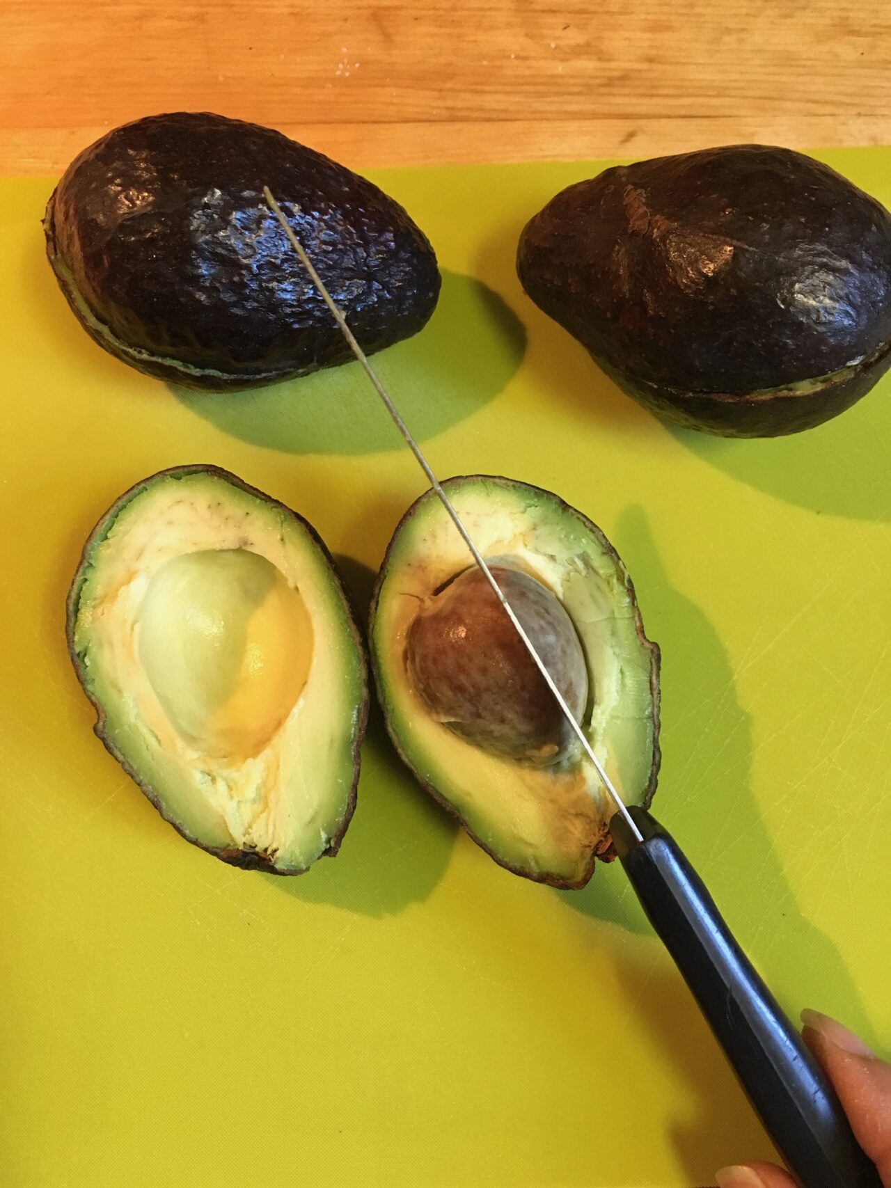 grow avocado from seed