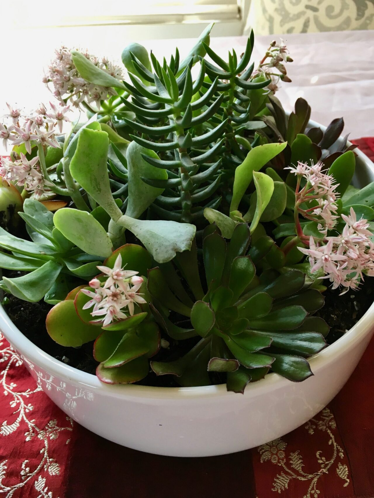How To Make A Succulent Bowl Garden