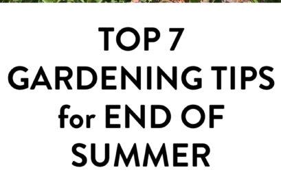 gardening tips for end of summer